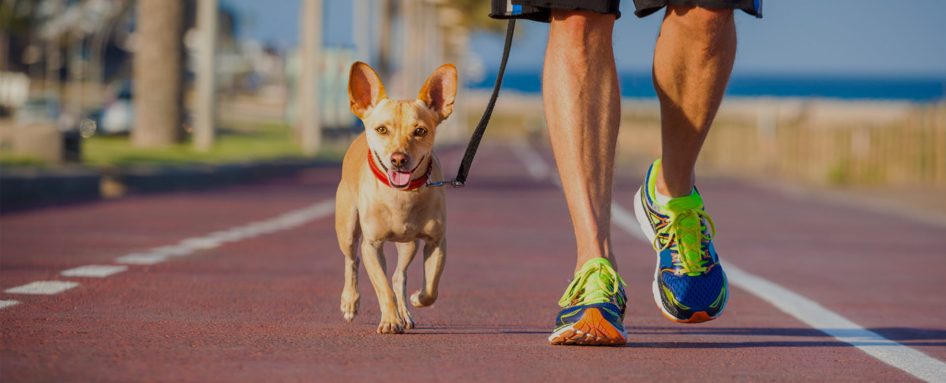 5 Tips for a Good Walk.